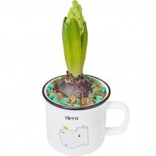 Горшечное растение Гиацинт в кружке